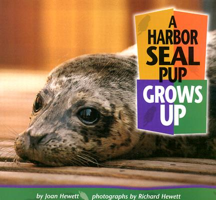 A Harbor Seal Pup Grows Up By Hewett, Joan/ Hewett, Richard (ILT)